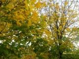 drugniy_info_odnoklass_osen20120122_10-t.jpg