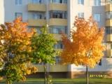 drugniy_info_odnoklass_osen20120122_22-t.jpg