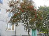 drugniy_info_odnoklass_osen20120122_26-t.jpg