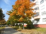 drugniy_info_odnoklass_osen20120122_29-t.jpg