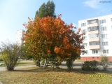 drugniy_info_odnoklass_osen20120122_30-t.jpg