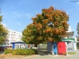 drugniy_info_odnoklass_osen20120122_33-t.jpg