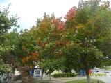 drugniy_info_odnoklass_osen20120122_57-t.jpg