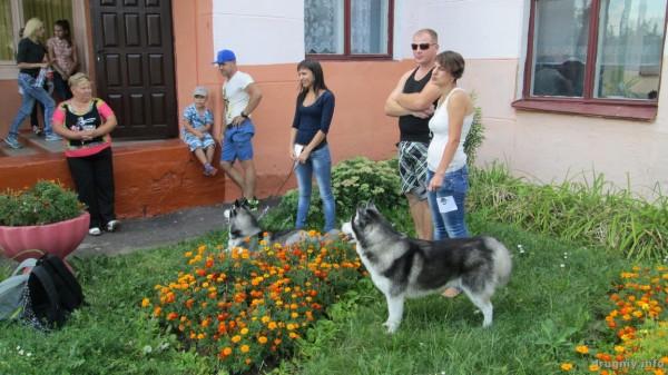 vystavka_sobak_rudensk_16_08_019